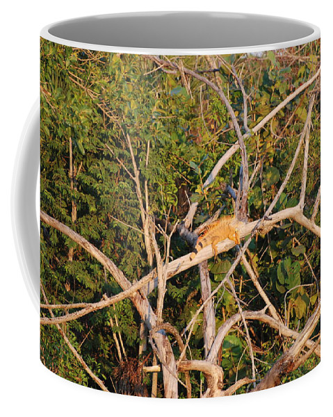 Wood Coffee Mug featuring the photograph Orange Iguana by Rob Hans