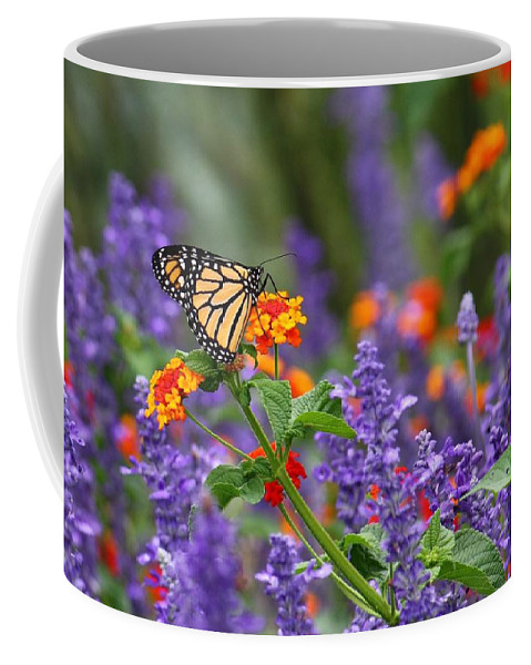 Monarch Butterfly Coffee Mug featuring the photograph Orange Juice by Lori Deiter