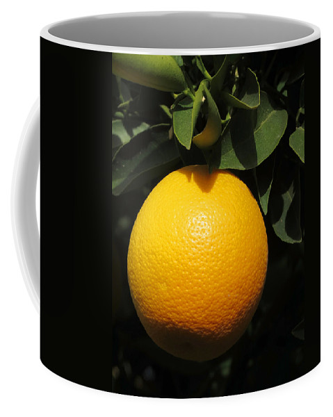 Fruit Coffee Mug featuring the photograph Orange by Laurel Powell