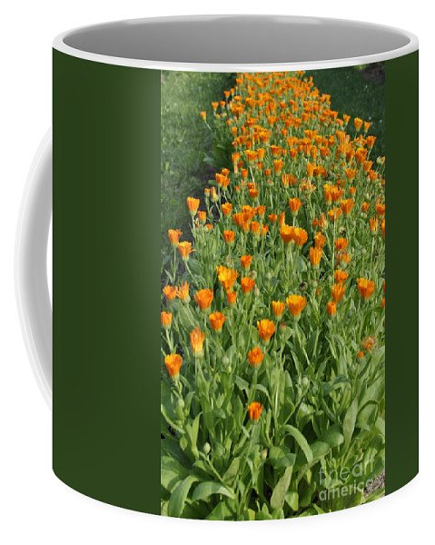 Orange Flowers Coffee Mug featuring the photograph Orange Parade by Penny Neimiller