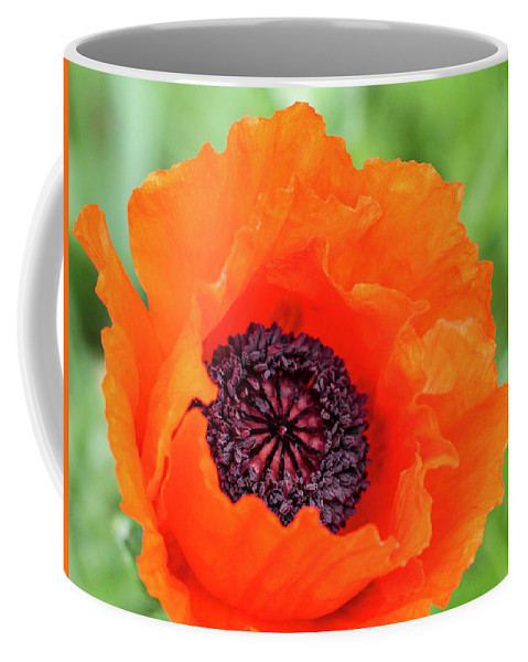 Poppy Coffee Mug featuring the photograph Orange Poppy by Lorraine Baum