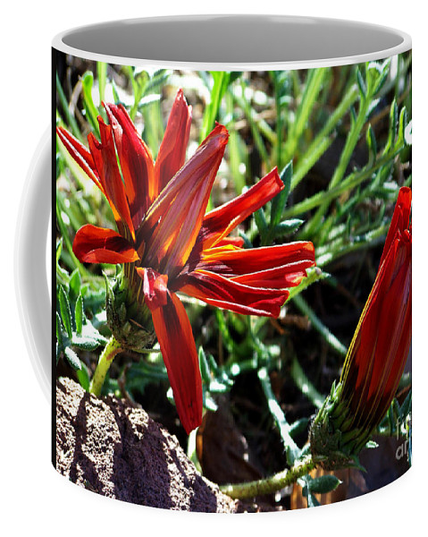 Gazania Coffee Mug featuring the photograph Orange Power by Kathy McClure