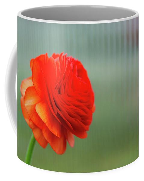 Flowers Coffee Mug featuring the photograph Orange Ranunculus by Julie Craig