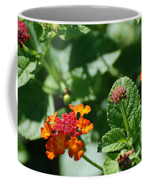 Orange Coffee Mug featuring the photograph Orange Red Flowers by Rob Hans