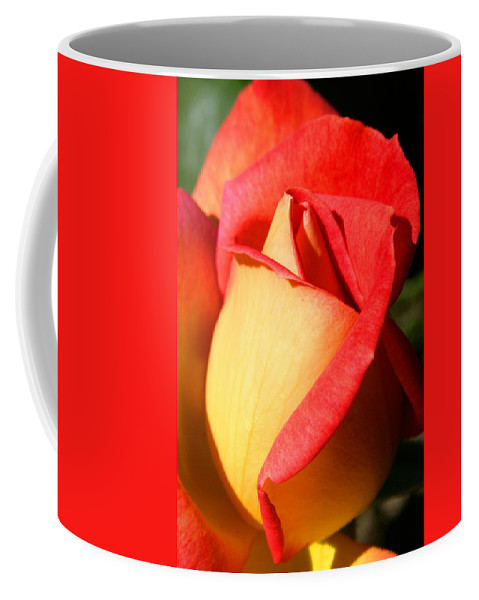 Orange Rosebud Coffee Mug featuring the photograph Orange Rosebud by Ralph A Ledergerber-Photography