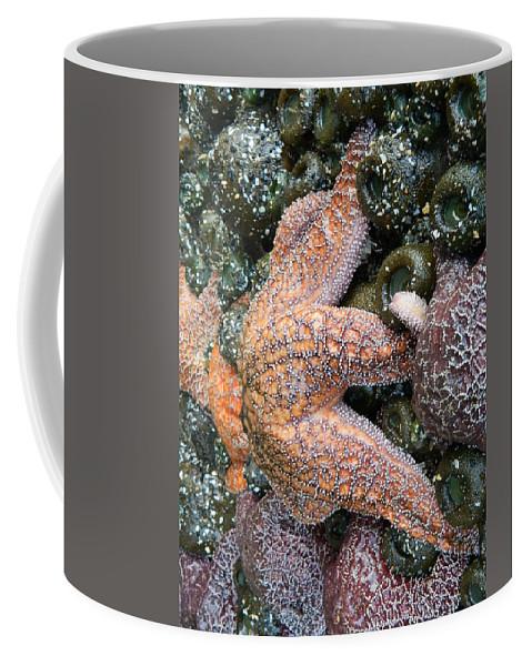 Starfish Coffee Mug featuring the photograph Orange Starfish by Gallery Of Hope
