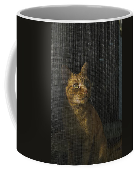 Photography Coffee Mug featuring the photograph Orange Tabby Cat Looking by Todd Gipstein