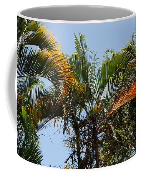 Palms Coffee Mug featuring the photograph Orange Trees by Rob Hans