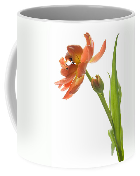 Tulip Coffee Mug featuring the photograph Orange Tulip by Ann Garrett