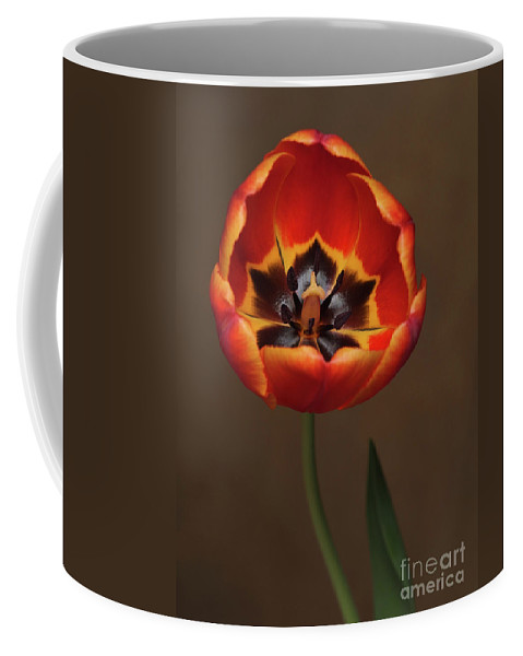 Flowers Coffee Mug featuring the photograph Orange Tulip by Dorothy Lee
