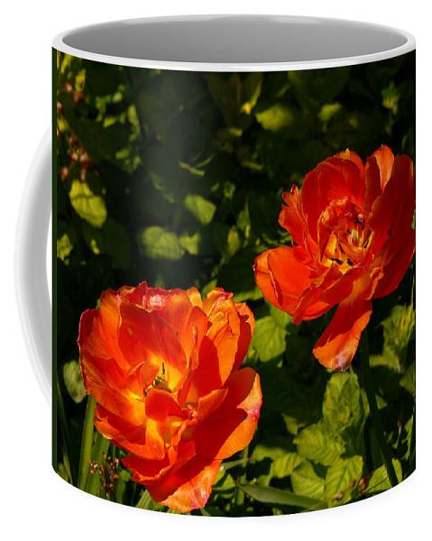 'orange Tulips' Coffee Mug featuring the photograph Orange Tulips In My Garden by Helmut Rottler
