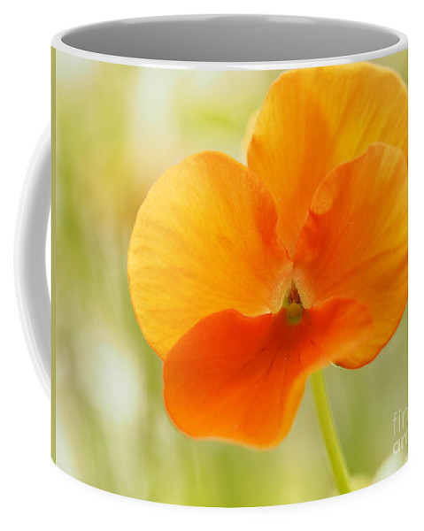 Flowers Coffee Mug featuring the photograph Orange Viola On A Brilliant Spring Day by Dorothy Lee