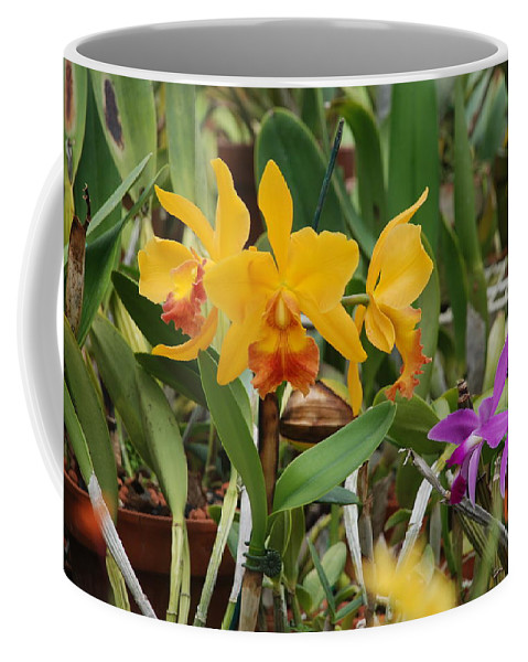 Orange Coffee Mug featuring the photograph Orangepurple Orchids by Rob Hans