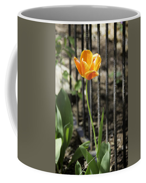Flowers Coffee Mug featuring the photograph Orangey Tulip by Teresa Mucha