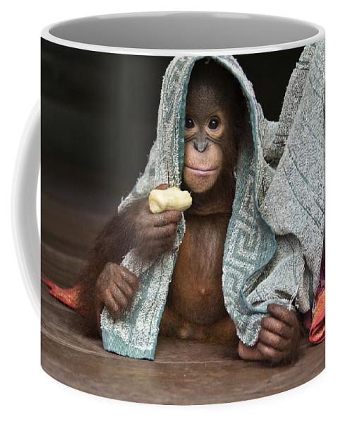 00486841 Coffee Mug featuring the photograph Orangutan 2yr Old Infant Holding Banana by Suzi Eszterhas