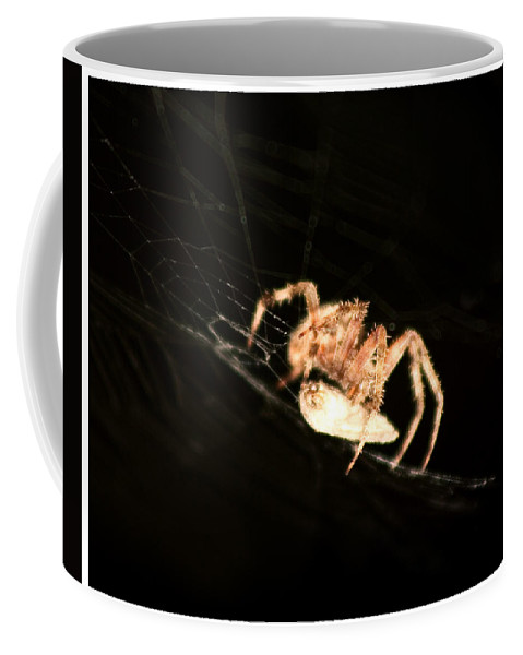 Spider Coffee Mug featuring the photograph Orb Spider by Anthony Jones