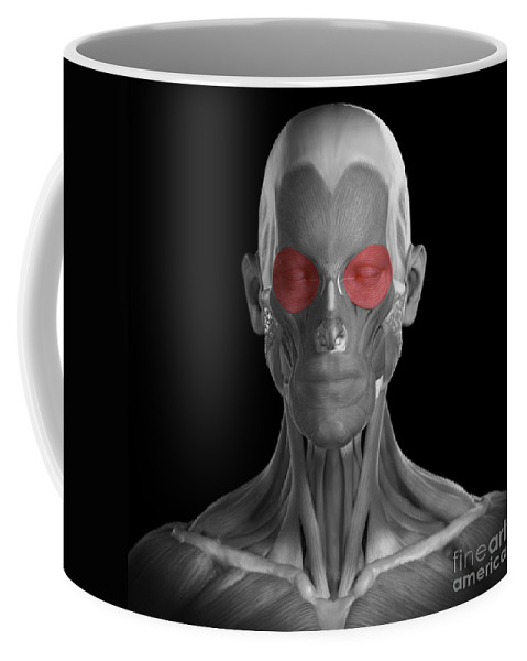 Digitally Generated Image Coffee Mug featuring the photograph Orbicularis Oculi by Science Picture Co