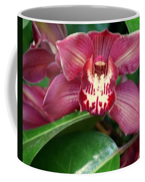 Flower Coffee Mug featuring the photograph Orchid 10 by Marty Koch
