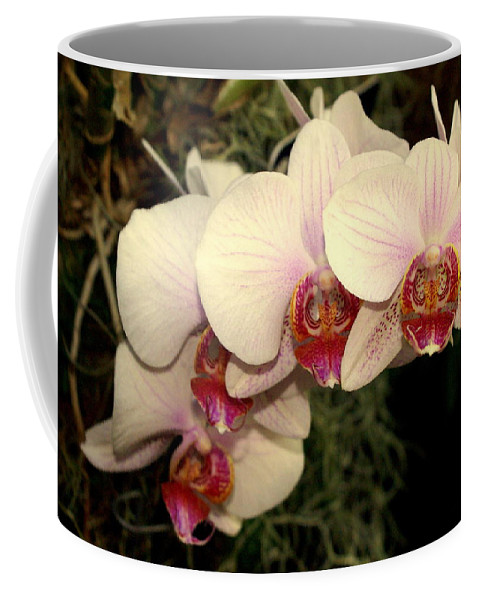 Flower Coffee Mug featuring the photograph Orchid 19 by Marty Koch