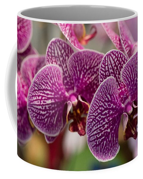 2016 Orchid Society Show Coffee Mug featuring the photograph Orchid Ascda Laksi by JG Thompson