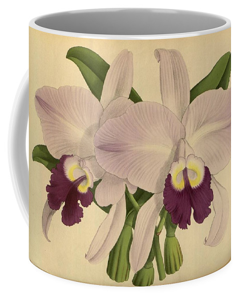 Orchid Coffee Mug featuring the painting Orchid Venezula by J Nugent Fitch
