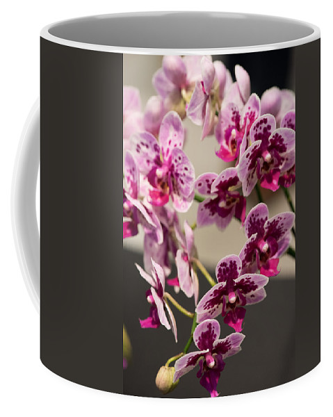 2016 Orchid Society Show Coffee Mug featuring the photograph Orchid Chian Xen Violin by JG Thompson