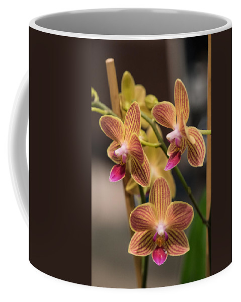 2016 Orchid Society Show Coffee Mug featuring the photograph Orchid Chingruey's Goldstaff by JG Thompson