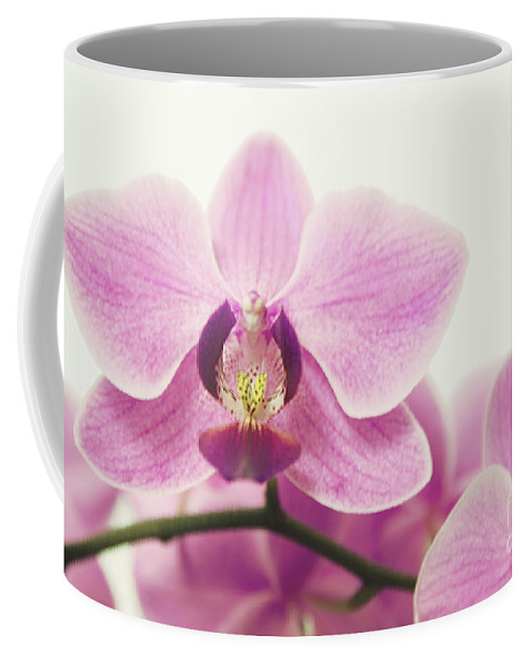 Orchid Coffee Mug featuring the photograph orchid III by Hannes Cmarits