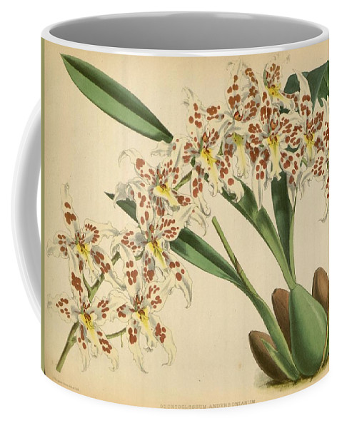 Orchid Coffee Mug featuring the painting Orchid Odontoglossum Andersonianum Grenada by J Nugent Fitch