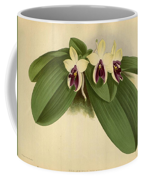 Orchid Coffee Mug featuring the painting Orchid Phalaenopsis Violacea Singapore by J Nugent Fitch