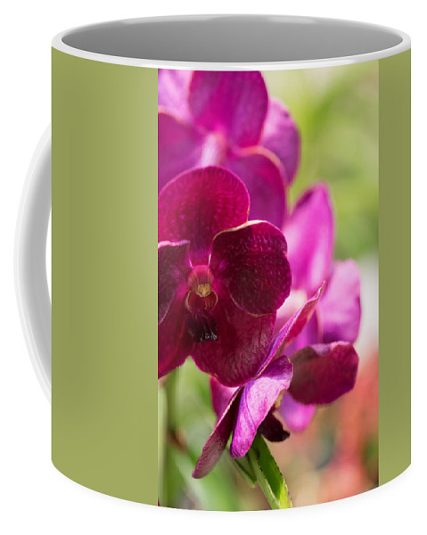 2016 Orchid Society Show Coffee Mug featuring the photograph Orchid Vanda Ratchaburi Waxy Red by JG Thompson