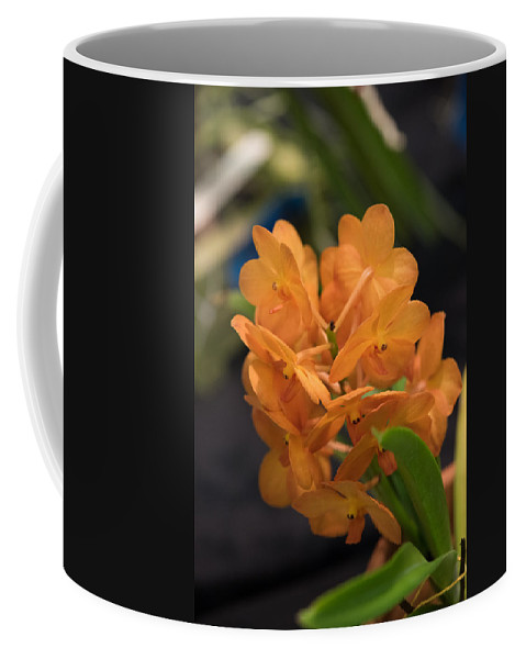 2016 Orchid Society Show Coffee Mug featuring the photograph Orchid Yip Sum Wah Orange by JG Thompson