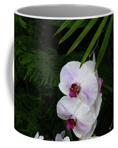 Orchids Coffee Mug featuring the photograph Orchids #1 by Kevin Gladwell