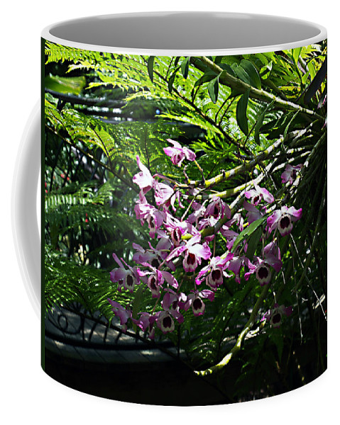 Orchid Coffee Mug featuring the photograph Orchids by Bob Johnson