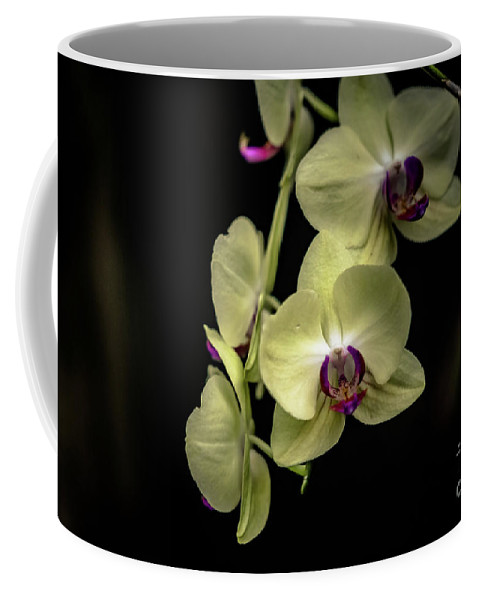 Floral Coffee Mug featuring the photograph Orchids by Debbie Nobile