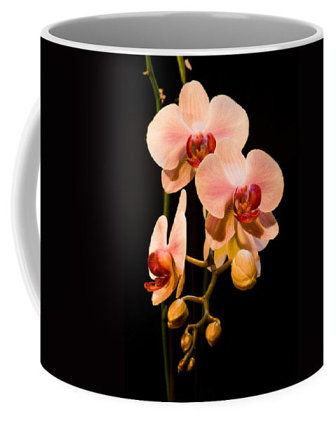 Beauty Coffee Mug featuring the photograph Orchids by Marc Garrido