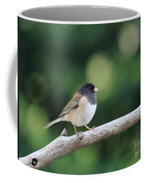 Wildlife Coffee Mug featuring the photograph Oregon Junco by Wingsdomain Art and Photography