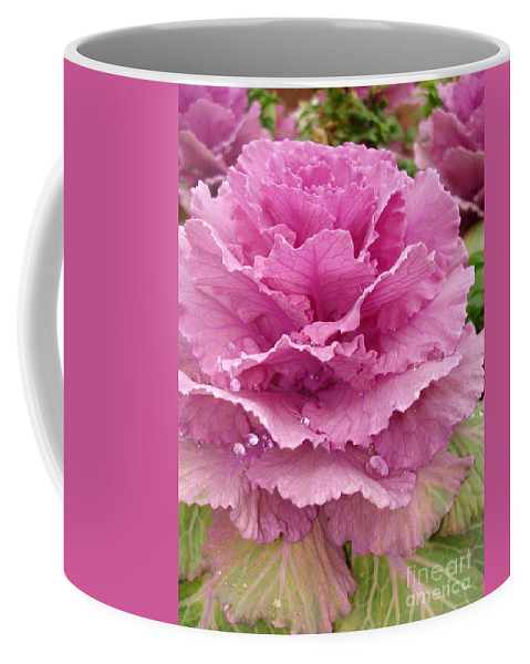 Ornamental Cabbage Coffee Mug featuring the photograph Ornamental Cabbage by Carol Groenen