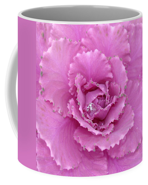 Ornamental Cabbage Coffee Mug featuring the photograph Ornamental Cabbage With Raindrops - Square by Carol Groenen