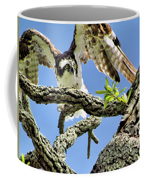 Animals Coffee Mug featuring the photograph Osprey 4 by John Trommer