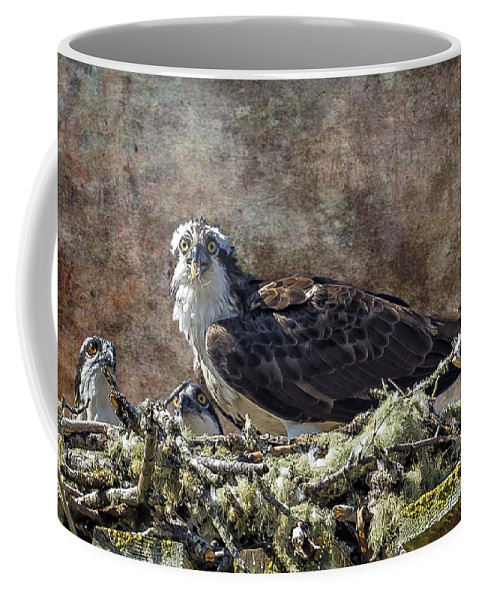 Osprey Coffee Mug featuring the photograph Osprey And Young - Feeding by Belinda Greb