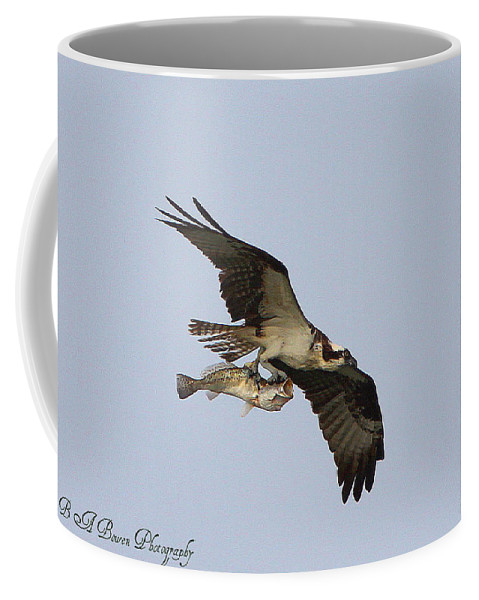 Osprey Catching A Fish Coffee Mug featuring the photograph Osprey Catches A Fish by Barbara Bowen