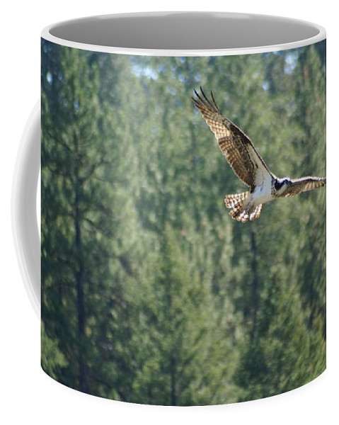 Birds Coffee Mug featuring the photograph Osprey In Flight 6 by Ben Upham III