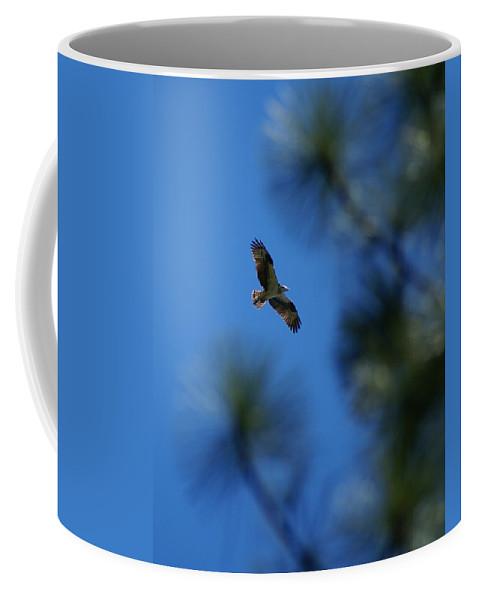Birds Coffee Mug featuring the photograph Osprey In Flight 8 by Ben Upham III
