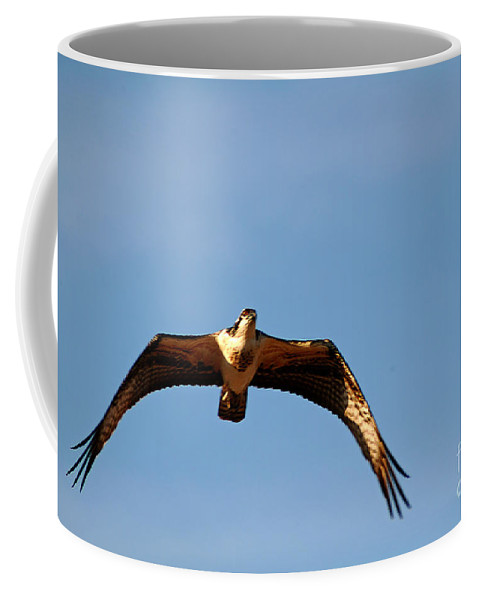Clay Coffee Mug featuring the photograph Osprey In Flight by Clayton Bruster