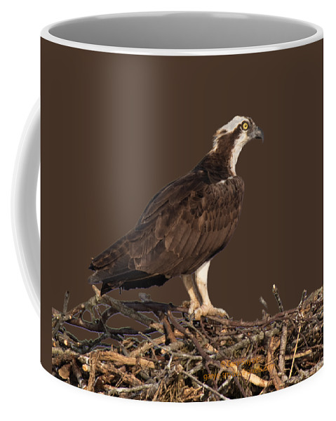 Osprey Coffee Mug featuring the photograph Osprey In Nest by Gary E Snyder