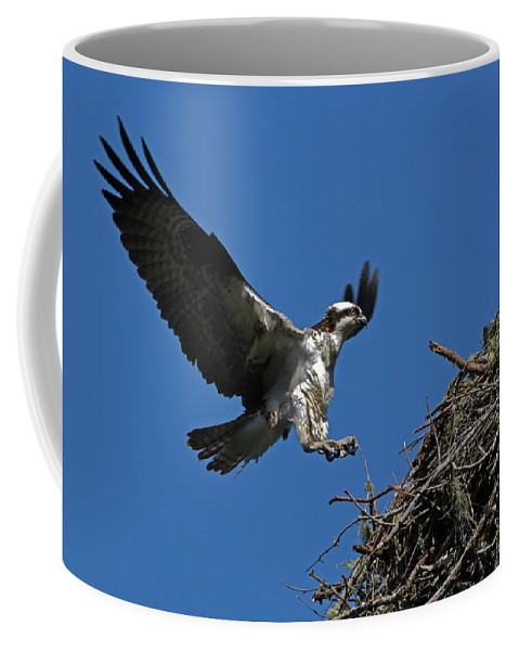Avian Coffee Mug featuring the photograph Osprey Landing Approach - Oregon Coast by Randall Ingalls