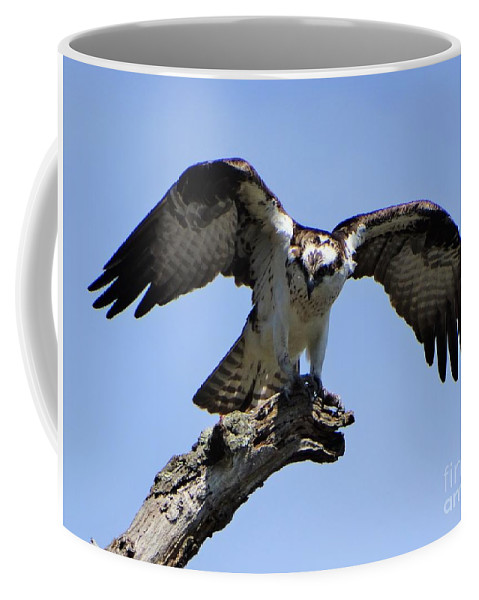 Osprey Lake St Catherine Poultney Wells Vermont Coffee Mug featuring the photograph Osprey Power by Karen Velsor