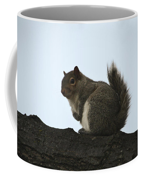 Squirrel Coffee Mug featuring the photograph Our Squirrel Chubby by Teresa Mucha