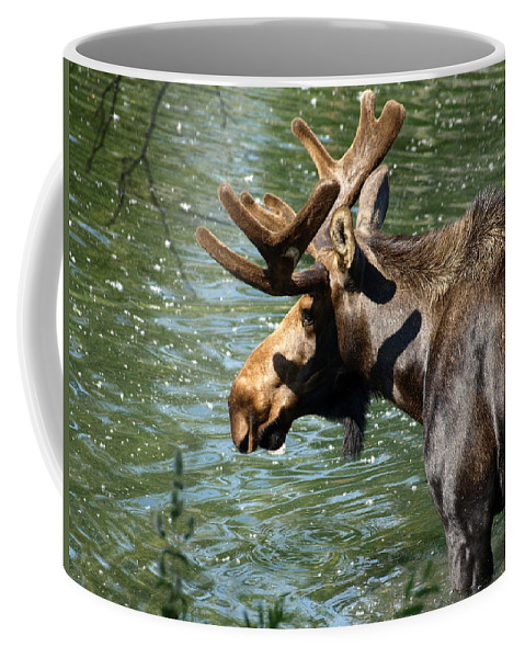 Wildlife Coffee Mug featuring the photograph Out For Lunch by DeeLon Merritt